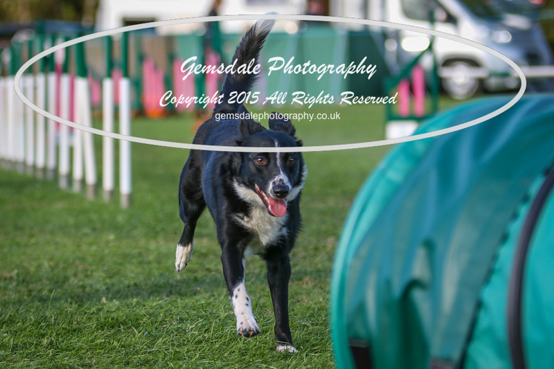 Southdowns Agility 25th September 2016-3033