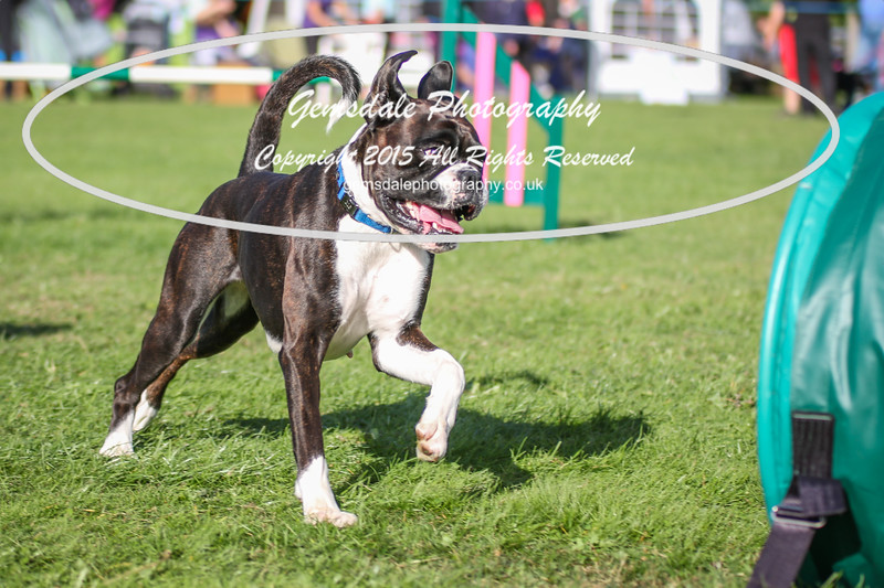 Southdowns Agility 25th September 2016-3056