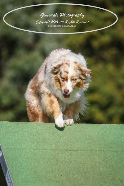 Southdowns Agility 25th September 2016-3066