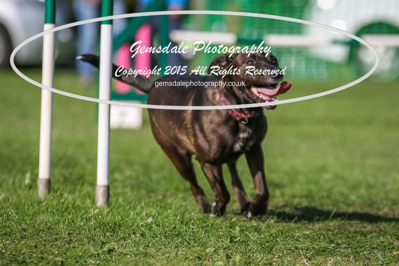 Southdowns Agility 25th September 2016-3068