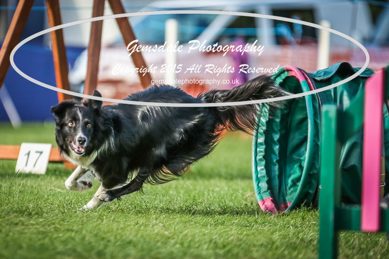 Southdowns Agility 25th September 2016-3082