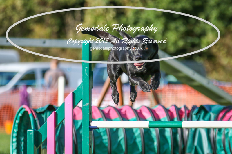 Southdowns Agility 25th September 2016-3064