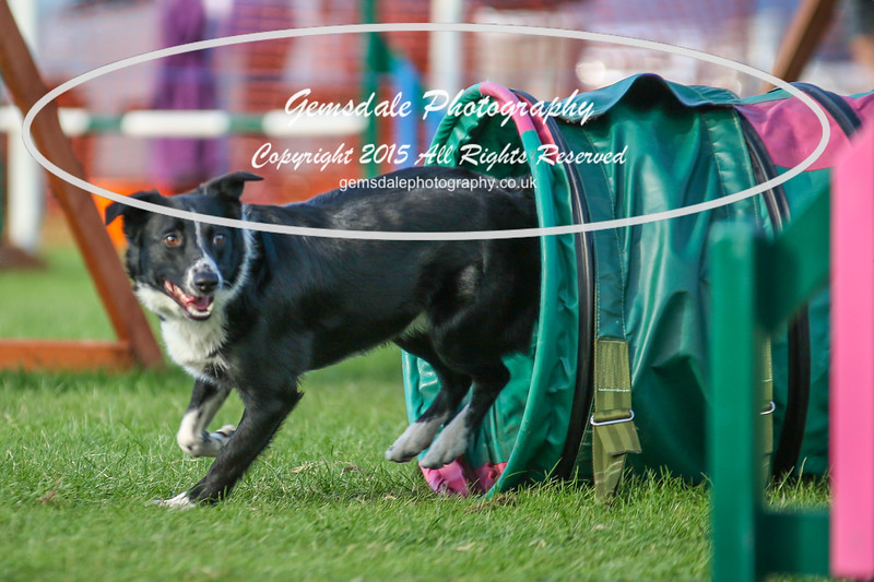 Southdowns Agility 25th September 2016-3034