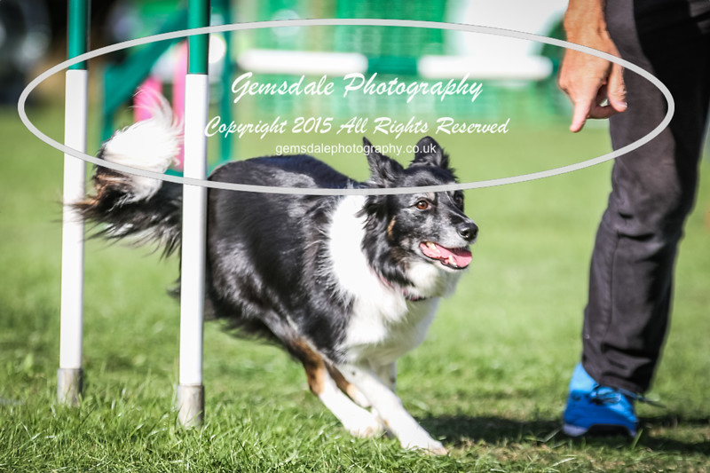 Southdowns Agility 25th September 2016-3042