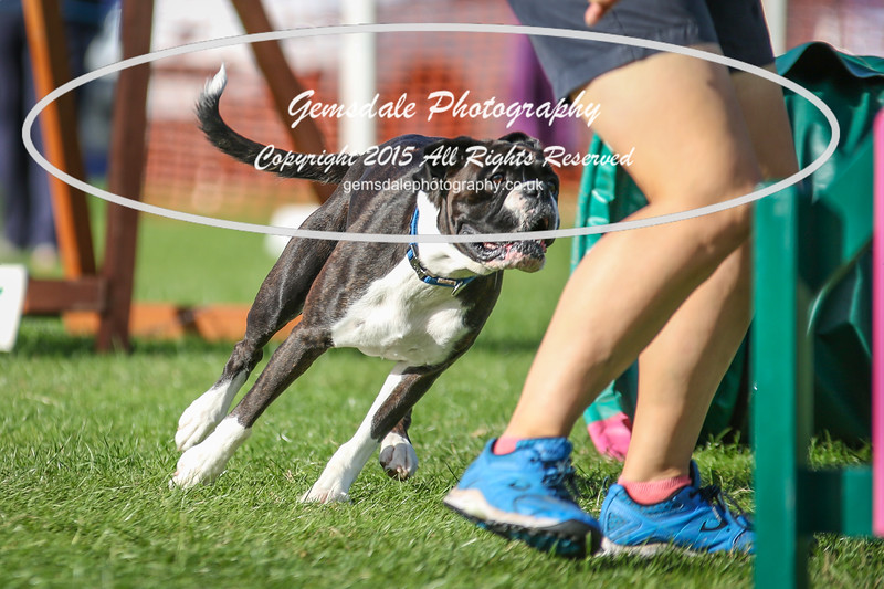 Southdowns Agility 25th September 2016-3057