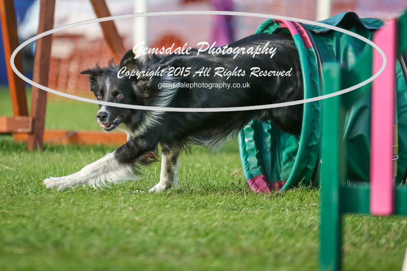 Southdowns Agility 25th September 2016-3081