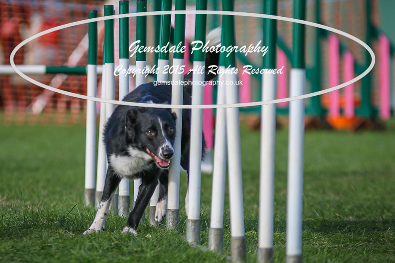 Southdowns Agility 25th September 2016-3031