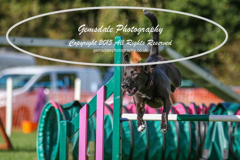 Southdowns Agility 25th September 2016-3071