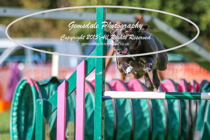 Southdowns Agility 25th September 2016-3070