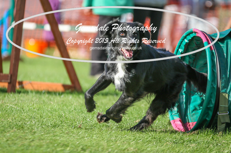 Southdowns Agility 25th September 2016-3027