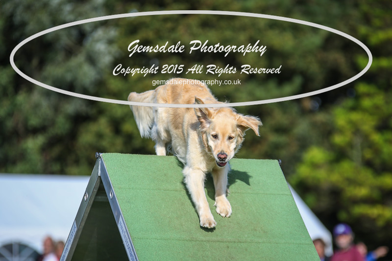 Southdowns Agility 25th September 2016-3035