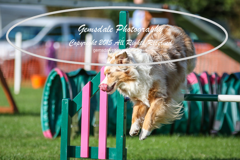 Southdowns Agility 25th September 2016-3067