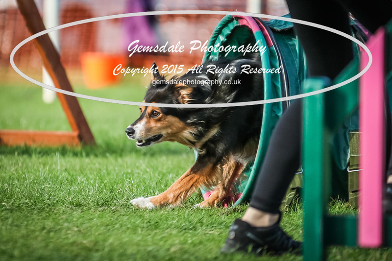 Southdowns Agility 25th September 2016-3095