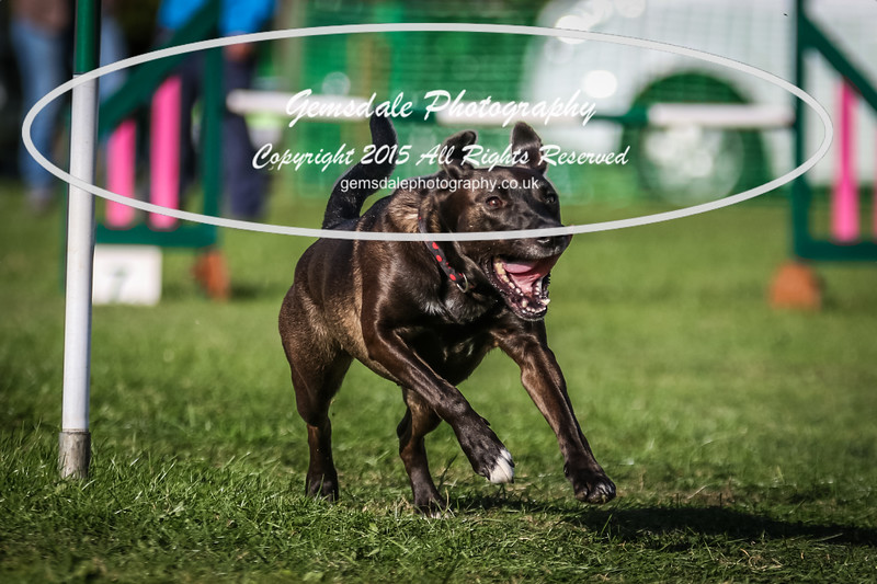 Southdowns Agility 25th September 2016-3069