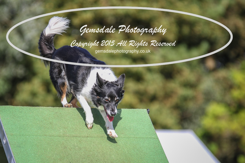 Southdowns Agility 25th September 2016-3041
