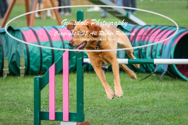Southdowns Agility 25th September 2016-3022