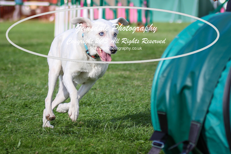 Southdowns Agility 25th September 2016-3016