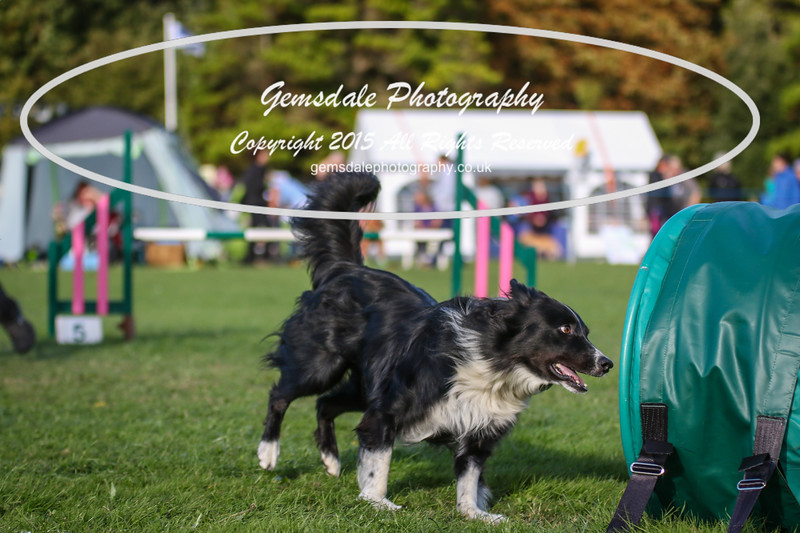Southdowns Agility 25th September 2016-3080