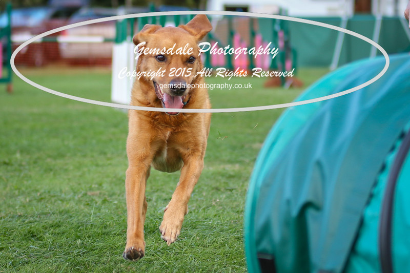 Southdowns Agility 25th September 2016-3021