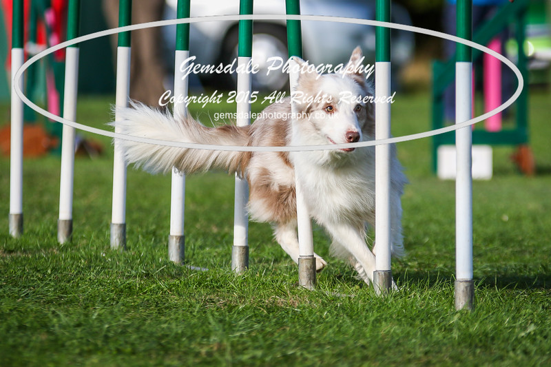 Southdowns Agility 25th September 2016-3084
