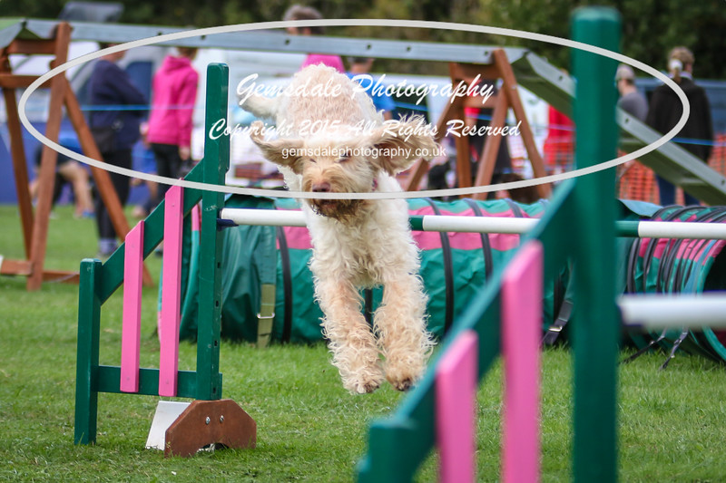 Southdowns Agility 25th September 2016-3004