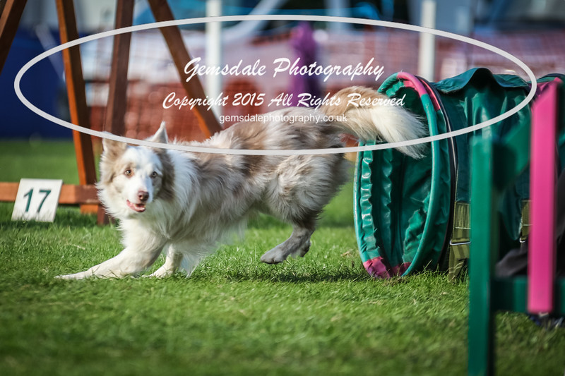 Southdowns Agility 25th September 2016-3086