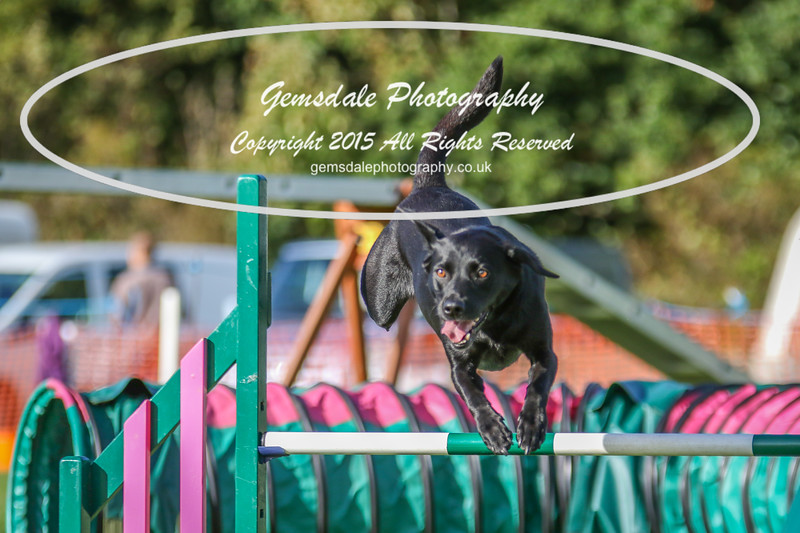 Southdowns Agility 25th September 2016-3065