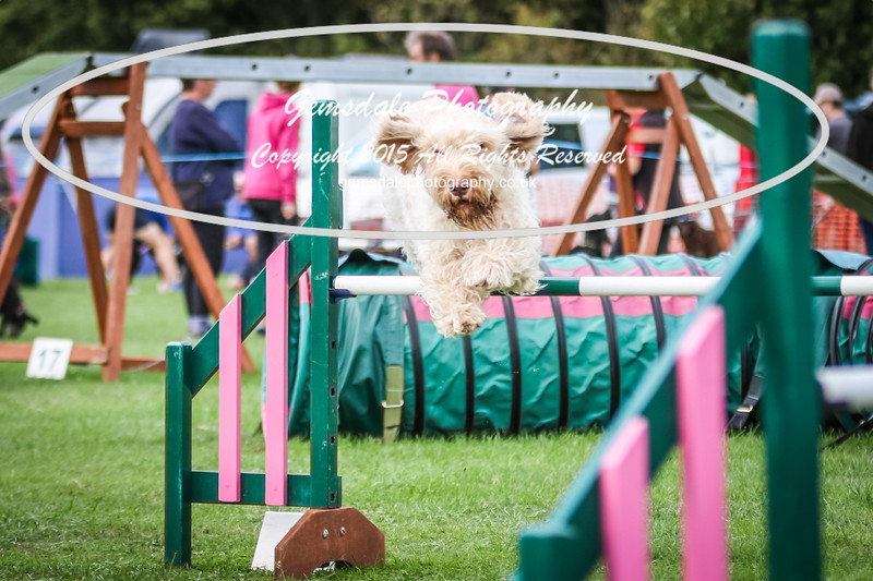Southdowns Agility 25th September 2016-3003