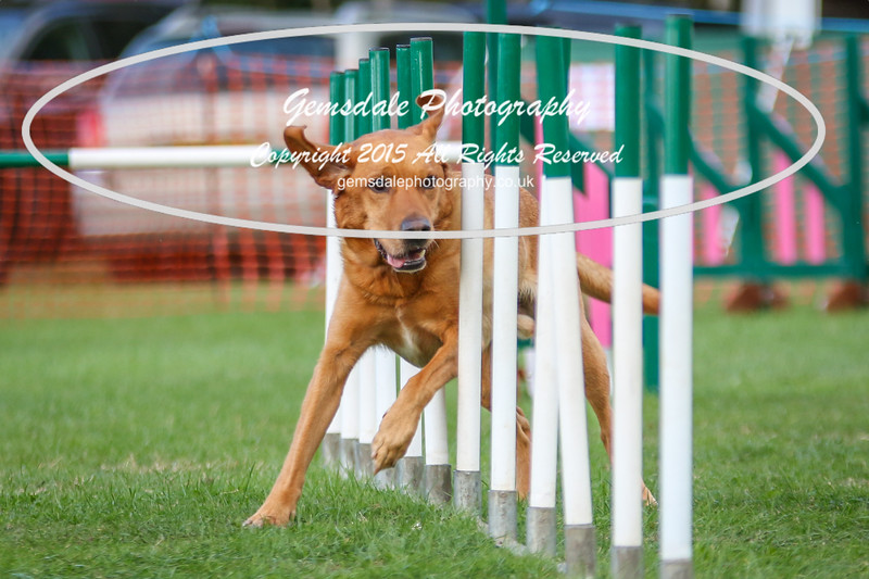 Southdowns Agility 25th September 2016-3018