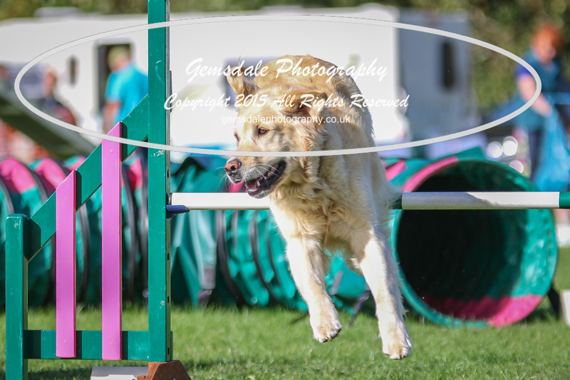 Southdowns Agility 25th September 2016-3036