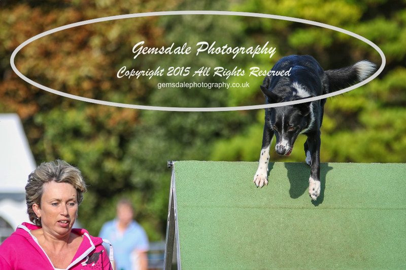 Southdowns Agility 25th September 2016-3029