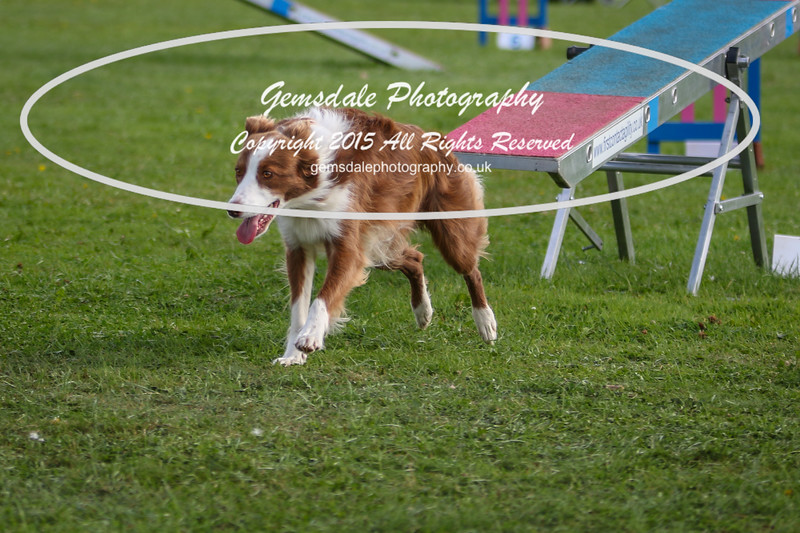 Southdowns Agility 25th September 2016-5022