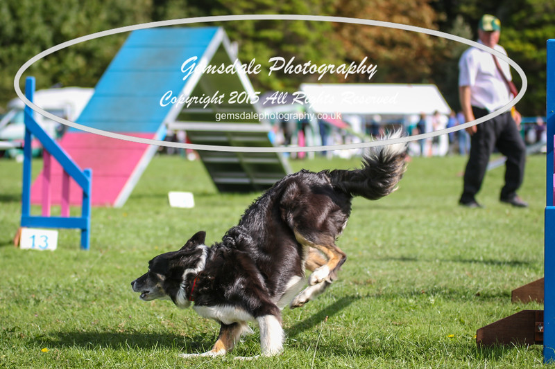 Southdowns Agility 25th September 2016-5017