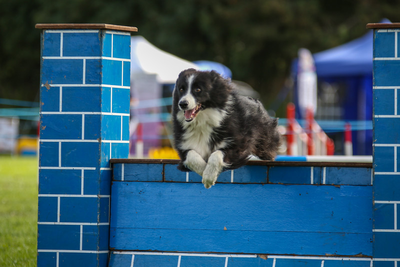 Southdowns Agility 25th September 2016-5030