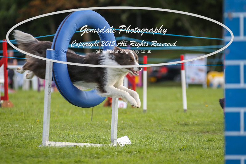 Southdowns Agility 25th September 2016-5042