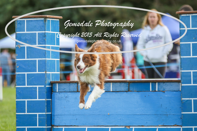 Southdowns Agility 25th September 2016-5010