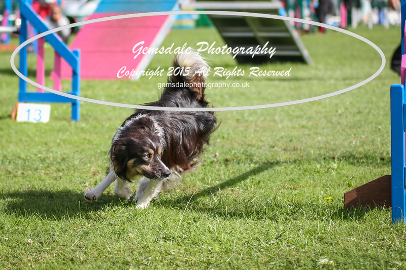 Southdowns Agility 25th September 2016-5027