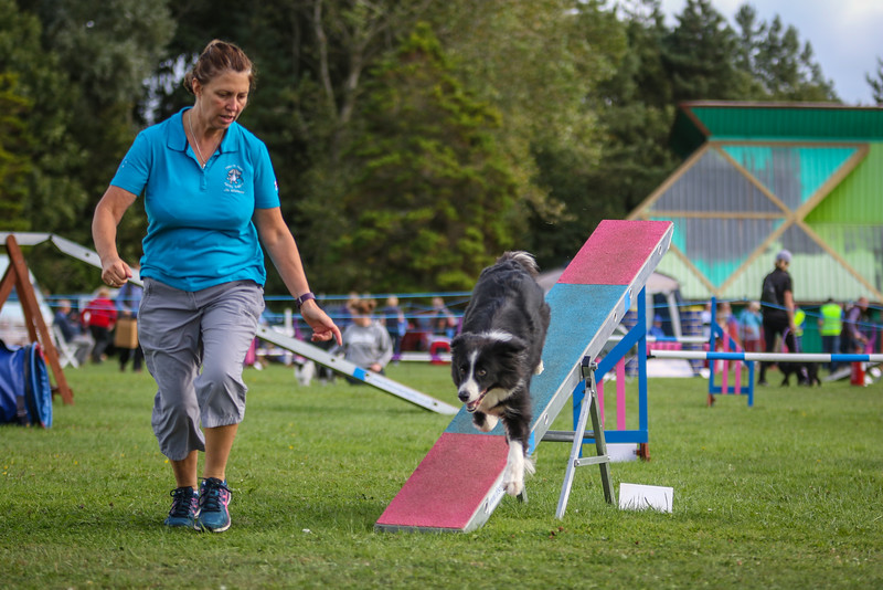 Southdowns Agility 25th September 2016-5032