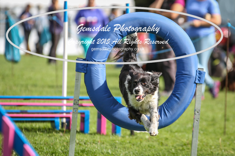 Southdowns Agility 25th September 2016-5001