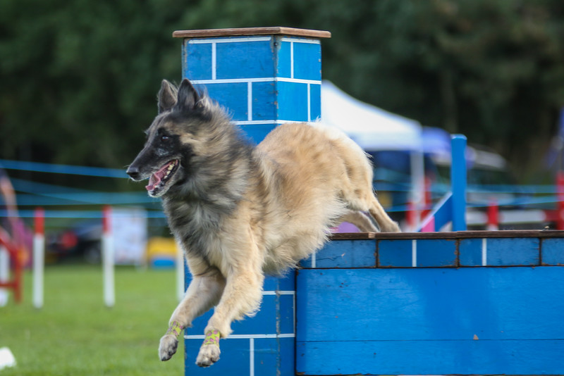 Southdowns Agility 25th September 2016-5036
