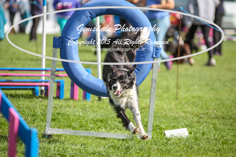 Southdowns Agility 25th September 2016-5002