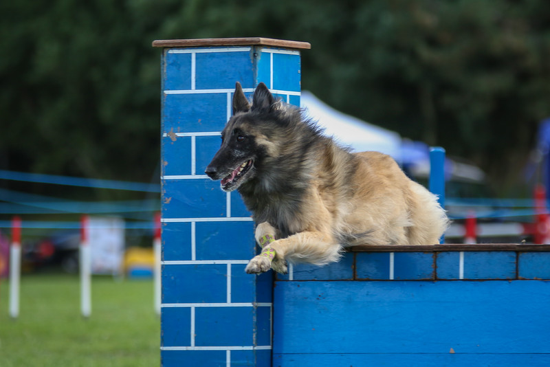 Southdowns Agility 25th September 2016-5035
