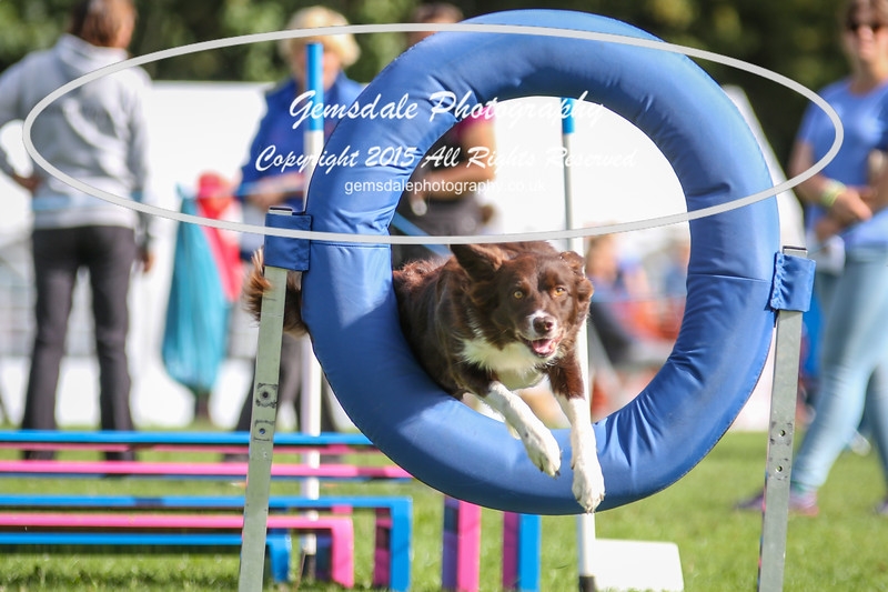 Southdowns Agility 25th September 2016-5004