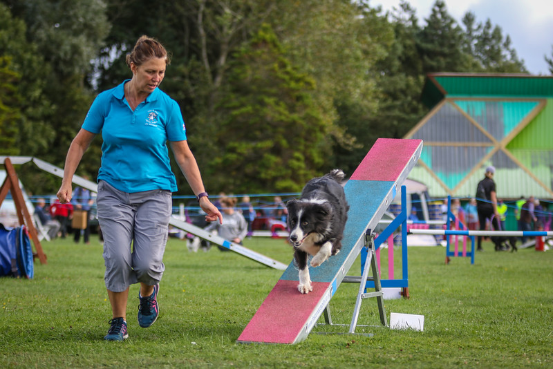 Southdowns Agility 25th September 2016-5031