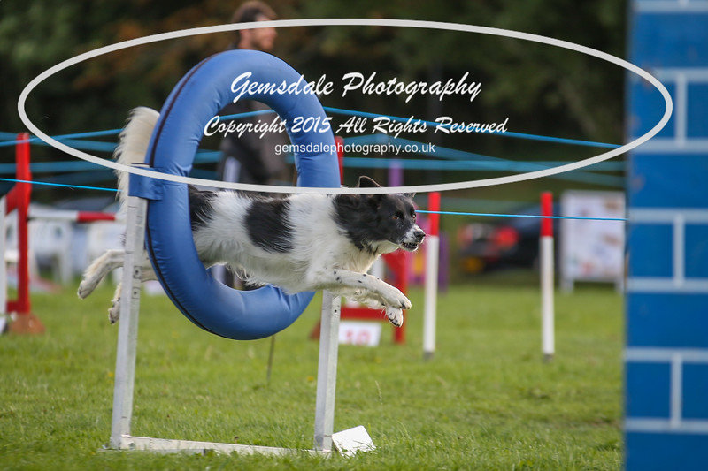 Southdowns Agility 25th September 2016-5043