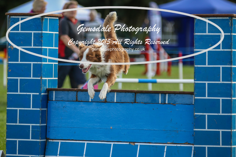 Southdowns Agility 25th September 2016-5021