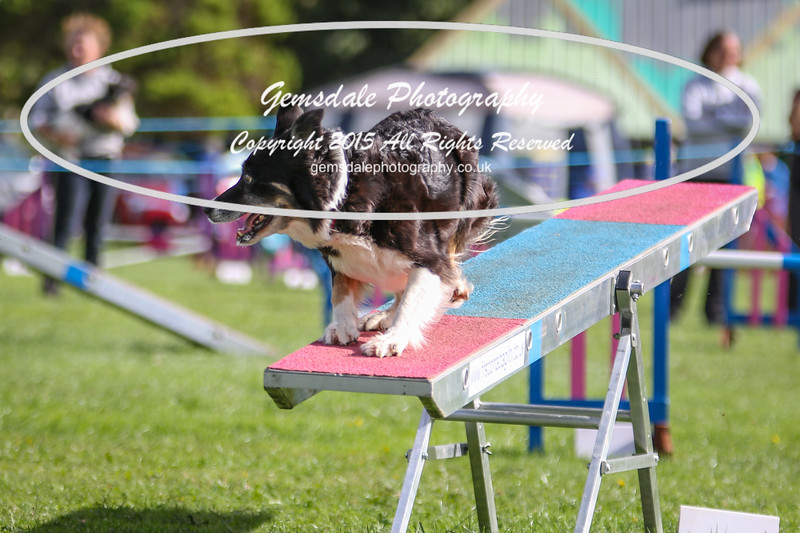 Southdowns Agility 25th September 2016-5016