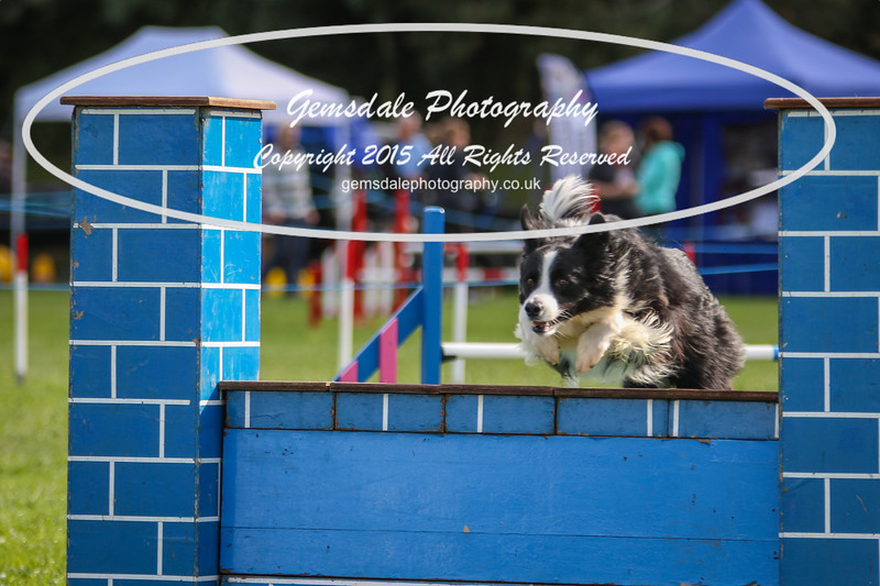 Southdowns Agility 25th September 2016-5011
