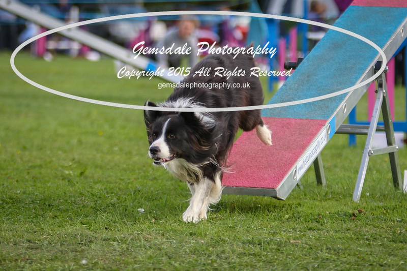 Southdowns Agility 25th September 2016-5041