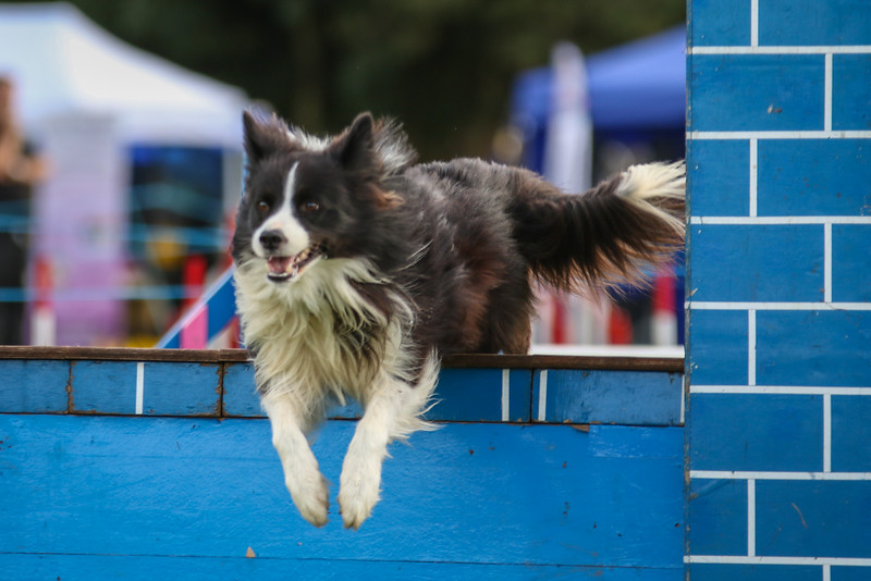 Southdowns Agility 25th September 2016-5040